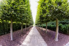 28 07 2015, LONDRES, Reino Unido, vista dos jardins de Kew, jardins botânicos reais foto de stock royalty free