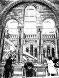 Londyński historii naturalnej muzeum obrazy royalty free