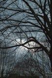Londyński niebo z ciemnymi drzewami, chmury i udziały gałąź zdjęcia stock