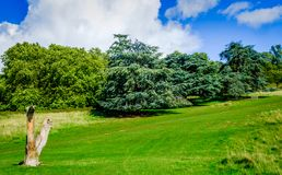Londyński nieboszczyka drzewo fotografia royalty free