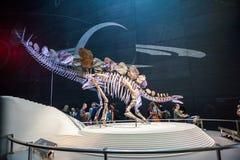 LONDYN, UK, historii naturalnej muzeum - najwięcej uzupełniają stegozaury Obraz Stock