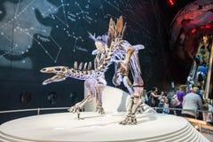 LONDYN, UK, historii naturalnej muzeum - najwięcej uzupełniają stegozaury Zdjęcie Royalty Free