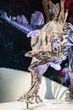 LONDYN, UK, historii naturalnej muzeum - najwięcej uzupełniają stegozaury Fotografia Royalty Free