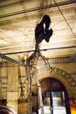 LONDYN, UK - LIPIEC 27, 2015: Historii Naturalnej muzeum - szczegóły od Dinosaurus Zdjęcie Stock