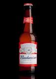 LONDYN, UK - MARZEC 21, 2017: Butelka Budweiser piwo na czarnym tle, Amerykański lager najpierw przedstawiający w 1876 Obrazy Stock