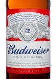 LONDYN, UK - MARZEC 21, 2017: Butelki etykietka Budweiser piwo z nowym skrętem z nakrętki na bielu Amerykański lager najpierw prz Zdjęcie Stock