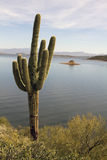 Lone Arizona Desert Cactus and Lake Stock Photography