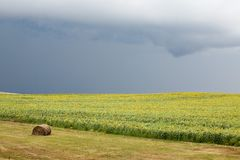 Lone Bale And Sunflower Field Stock Photo