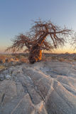 Lone Baobab Tree and Rock formation Stock Photos