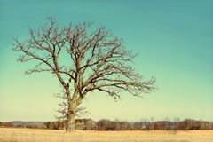 Lone Bare Branched Winter Tree in the Country Royalty Free Stock Photos