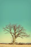 Lone Bare Branched Winter Tree in the Country Royalty Free Stock Images