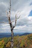 A lone bare tree on Skyline Drive Stock Images