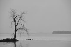 Lone barren tree in a fog. Lone barren tree on an a bit of land that juts out into a very foggy lake. Very gloomy, moody, atmosphere stock photography