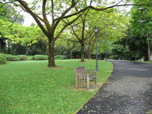 Lone bench in the park. In Singapore Botanical Gardens Stock Photos