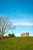 Lone bench in park against blue skies Stock Image
