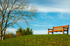 Lone bench in park. On bright sunny Autumn day Royalty Free Stock Photography