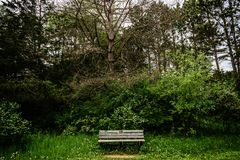 Lone Bench in State Park of Minnesota royalty free stock photo