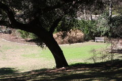 Lone Bench. Taken is San Antonio Texas. This is a peaceful setting before the sunset Stock Image