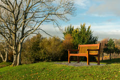 Lone bench and tree. Lone bench in park on bright sunny Autumn day Royalty Free Stock Image