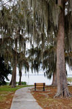 A lone bench under hanging spanish moss and live oaks Stock Photo