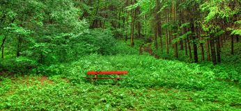 Lone Bench in Woodland. Empty bench sits among lush greenery. Green woodland setting Royalty Free Stock Photography