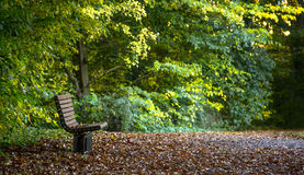 Lone bench in the woods. In a little opening in the woods a bench with leaves on appears Stock Image