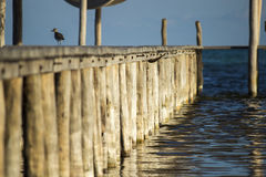 Lone bird on a dock Royalty Free Stock Photography
