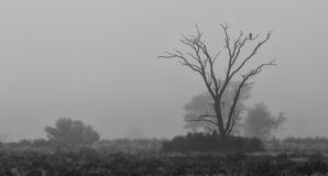 Lone bird sitting silhouetted in a dead tree in early morning fo Royalty Free Stock Photo