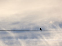 Lone Bird on Wires in Clouds Royalty Free Stock Image