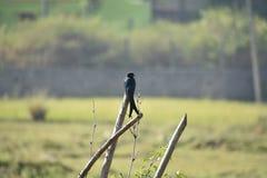 Lone black bird on stem royalty free stock images