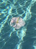 Lone blomma Royaltyfria Bilder