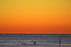 Lone Blue Heron on a sand spit in Deltaville Royalty Free Stock Photo