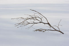 Lone branch Royalty Free Stock Photos