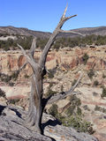 Lone Branch. Lone scrub tree overlooking Sand Canyon Royalty Free Stock Photo