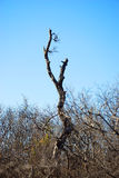 Lone Branch in Bramble Forest Royalty Free Stock Photo