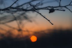 A lone branch on the bright orange backdrop of the setting sun. Branch without leaves close-up. Beautiful winter sunset bokeh. royalty free stock photos