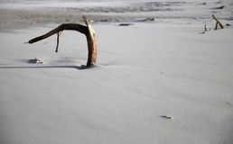 Lone branch in the sand on the beach in Debkach, Poland stock images