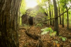 Lone cabin in the woods royalty free stock photography