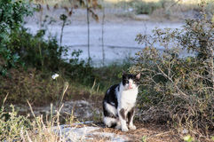 A lone cat sitting on a rock in forest Royalty Free Stock Photo
