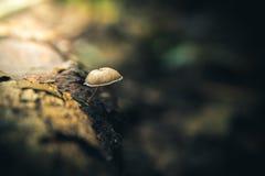 Lone champinjon Arkivfoto