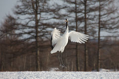 Lone Crane in Wintertime Royalty Free Stock Images