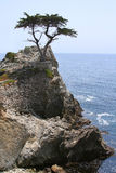 Lone Cypress on 17-Mile Drive. The Lone Cypress perched on a rocky cliff on 17-Mile Drive on Northern California coast between Monterey and Carmel. The cypress Royalty Free Stock Photography
