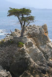 Lone Cypress on 17-Mile Drive. The Lone Cypress perched on a rocky cliff on 17-Mile Drive on Northern California coast between Monterey and Carmel. The cypress Royalty Free Stock Photo