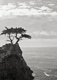 Lone Cypress on 17 Mile Drive royalty free stock image