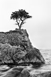 Lone Cypress. Along 17 mile drive near Carmel, California and Pebble Beach Gold Course stands strong against coastal winds Royalty Free Stock Images