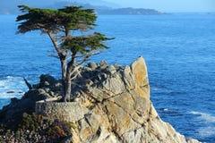 lone cypress Royaltyfri Foto