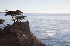 Lone Cypress, Carmel, CA Stock Photography