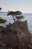 Lone Cypress, Carmel, CA Royalty Free Stock Photography