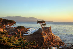 The Lone Cypress. The famous and most photographed cypress tree on 17-mile drive Pebble beach, California Royalty Free Stock Image