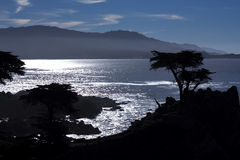 Lone Cypress, 17 Mile Drive Stock Photos